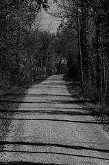 (Black and) White road (s81c) Tags: turn curva sanstinodilivenza corbolone italia italy veneto ombre shadows alberi trees dirtroad countryside campagna stradadicampagna countryroad biancoenero blackandwhite bn bw