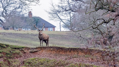 Bradgate Country Park 18th February 2018 (boddle (Steve Hart)) Tags: stevestevenhartcoventryunitedkingdomcanon5d4 bradgate country park 18th february 2018 steve hart boddle steven bruce wyke road wyken coventry united kingdon england great britain canon 5d mk4 6d 100400mm is usm ii 2470mm standard wild wilds wildlife life nature natural bird birds flowers flower fungii fungus insect insects spiders butterfly moth butterflies moths creepy crawley winter spring summer autumn seasons sunset weather sun sky cloud clouds panoramic landscape newtownlinford unitedkingdom gb