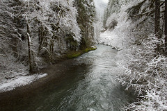 Yukwah recreation area in snow, Oregon (icetsarina) Tags: oregon winter santiam forest snow frost saariysqualitypictures