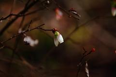 Springtime (alexanderglerch) Tags: spring macro flower georgia ga