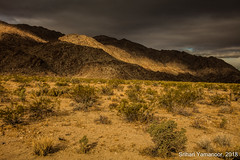 Filling Up (yamanoor) Tags: nature photography landscape desert desertscape sunrise light shadows creosote bush cactii sunlight california joshua tree national park public lands mountains hills dawn clouds sky clearing foreground canon 5dsr 29palms