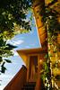 Oak Cliff, TX (BurlapZack) Tags: pentaxk1 sigma35mmf14dghsm sigma35art vscofilm pack01 dallastx oakclifftx house wideangle gold goldenhour afternoon sunset vines plant light stairs doorway door portal leaves flor flora bokeh dof