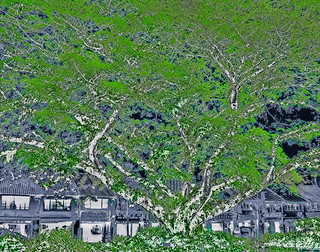 Hypnagogic Tree