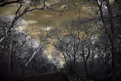 IMG_1754 (Dan Correia) Tags: marthasvineyard island clouds infrared canonef1740mmf4lusm 15fav topv111 510fav topv333 topv555
