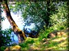 A orillas del Miño (marmimuralla) Tags: árbol río miño lugo marmimuralla