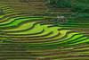_U1H1202,0617 La Pán Tẩn,Mù Cang Chải,Yên Bái (HUONGBEO PHOTO) Tags: mùanướcđổ sowingseason ruộngbậcthang yênbái mùcangchải lapántẩn vietnamlandscape vietnamscenery asian countryside northvietnam photography green abstract terraces highland landscape outdoor