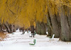 Relaxing Among the Weeping Willows (agladshtein) Tags: cny cayugalake centralnewyork fingerlakes ithaca landscape ny newyork sonya7riii tompkinscounty winter frozen ice play scenic bench weepingwillow trees sony70300mm