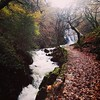 Pistyll RhaedreFall, Lllanberis, Snowdon National Park (Eleanor Howell) Tags: elements waterfalls falls woodlands pathway path autumn leaves