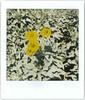 Lomo Flower Bee (Doha Sam) Tags: analogue doha film fujifilm fujiroid instant instax lomoinstantsquare lomography qatar samagnew scan analog smashandgrabphotocom wwwsamagnewcom