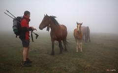 Hablando con la yegua (Jabi Artaraz) Tags: jabiartaraz peiomurgoitio yegua horse niebla beriain navarra sandonato nature