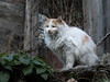 Street Cat (ajmurtha) Tags: bulgaria cat cats