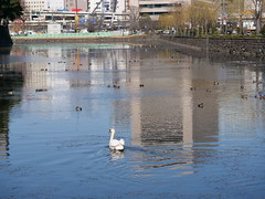 P1010264 (digitalbear) Tags: panasonic lumix g9 pro gvario 45200mm f456 powerois marunouchi otemachi tokyo japan imperial palace birds