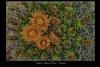 Saguaro National Park - Arizona (vonhoheneck) Tags: saguaronationalpark unitedstatesnationalpark pimacounty southeasternarizona arizona tucson rinconmountain sonorandesert kakti kaktus südosten schölkopf schoelkopf canon eos6d