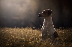 Alana (Alexandremqs) Tags: explore expression portugal pets dogs backlight scene status light nature natural animal yourbestoftoday feel feeling lifestyle yellow pose