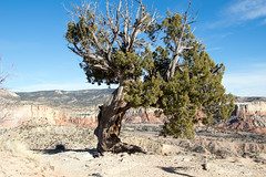 on the Chimney Rock Trail (Paul and Jill) Tags: chimneyrocktrail ghostranch abiquiu newmexico