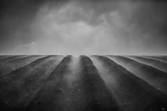 Steaming Earth (*altglas*) Tags: earth erde dampf steam nebel fog landscape abstract minimal acker field