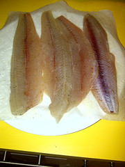 Atlantic Spanish Mackerel - Scomberomorus maculatus - Manatee County, Florida, USA - April 24, 2014 (mango verde) Tags: atlanticspanishmackerel scomberomorusmaculatus parsley fish salt oliveoil pepper castiron food sarasotabay manateecounty florida usa mangoverde