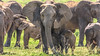 the big one (bocero1977) Tags: 2018 morning wild wildlife big africa elephants savanna animals family big5 tanzania safari