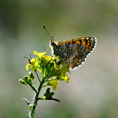butterfly yellow (mustafakgumus1) Tags: insect fly butterfly flower standing