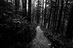 Nature's path (Photos by Christopher Percy) Tags: olympicnationalpark nationalpark washingtonstate naturetrail hiking nature woods forest nationalforest travel blackandwhite sonya7rii sonygmaster bw