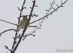 Stop Stalking me. (Elisa Sanchi) Tags: bird uccello inverno winter cold freddo tree albero neve snow bianco white