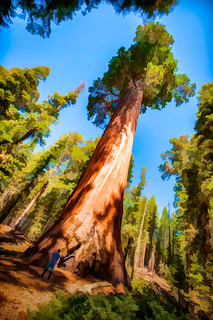 Giant Sequoia - Textured HDR