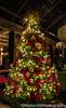Longwood Christmas (Mellon 99) Tags: mellon99photography longwoodgardens longwood lights davemellon pennsylvania kennettsquare