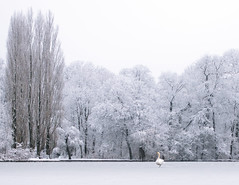 The Swan (redfurwolf) Tags: nature swan winter landscape snow trees lake ice water animal wildlife sky outdoor redfurwolf new sony rx100m4 landscapephotography wildlifephotography ngc nationalgeo munich englishgarden