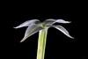 Fiore pianta grassa #36 ⭐ (Franco Gavioli) Tags: 2018 fragavio francesco gavioli canoneos600d canonef100mmf28macrousm scanlio manfrotto785b macro succulentflower fiorepiantagrassa augusta sicilia sicily