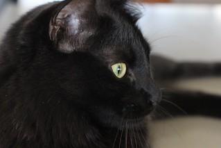 Eye of Dora