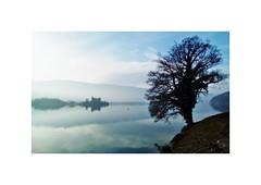 The tree (nathaliedunaigre) Tags: lake lac lacdannecy lakeofannecy tree arbre reflets reflections bleu blue