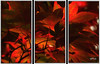 Maple Tree. Triptych. (Picture post.) Tags: maple bloodgood triptych nature green shadows