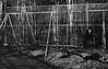 Childlike (claire.nish) Tags: depression isolation separation lost longing love divorce pain abandonment waiting watching cigarette wishing wish wonder blackandwhite 35mm film
