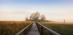 Early morning (Mika Tuomela) Tags: morninglight morning finland westernfinland pier path sunrise foggysunrise cold landscape landscapephotography nature naturephotography naturephoto autumn autumncolors