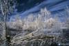 Het natuurpark Lelystad in infrarood (Richard van Hilten) Tags: infrared infrarood ir lelystad flevoland holland