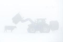 Farming in the Fog (Jenna.Lynn.Photography) Tags: fog foggy white blackandwhite tractor farm farming cow cattle cattlefarm winterfog winter snow feed feeding feedingcattle pet petphotography february landscape foggylandscape bw soft eos canon animal