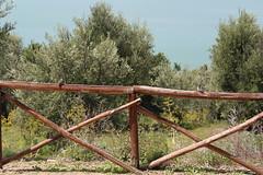 IMG_3007 (19ouch83) Tags: trasimeno isola lago lake umbria passignano