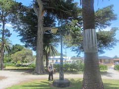 Street Lamp in a Williamstown Park (d.kevan) Tags: parksandgardens trees grass plants richard streetlamps paths houses flowers cars fences palmtreetrunks