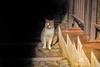 Buscando el sol (Chaguaceda Fotografias) Tags: algarve animales blanco cacelhavelha doscolores escalones fauna felinos gatos naturaleza portugal sol