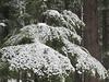 Ushu Forest, Kalam (Zain's) Tags: ushu forest kalam swat kpk pakistan nature beauty
