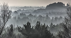 Dorset Misty Forest (Nick L) Tags: tonalrecession tone forest dorset viewpoint aerialperspective atmosphericperspective tress hills landscape misty