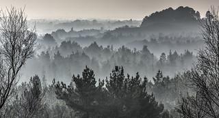 Dorset Misty Forest