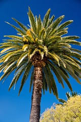 2017 Palm Tree 5 (DrLensCap) Tags: palm tree mission san luis rey de franco oceanside california ca robert kramer