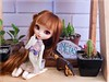 ✧Metas & Balanço geral✧ (Pliash) Tags: doll cute kawaii pullip kit mio custom madeleinedollies madeleinedolls madeleine dollies dolls fullcustom full cactus cacto plants
