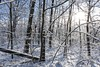 Snowshine (Skyelyte) Tags: snow trees forest woods wolcottct route322 morning winter cold newengland winterinnewengland