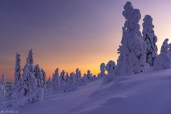 Dusk at Kuer - Lapland (Captures.ch) Tags: aufnahme baum himmel hügel landschaft nationalpark wald winter capture hills landscape sky snow tree valley finland äkäslompolo lapland yllas abend abenddämmerung sonneuntergang dusk evening sunset kuer