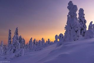 Dusk at Kuer - Lapland