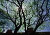 Urban thicket (Debmalya Mukherjee) Tags: anushaktinagar mumbai silhouette debmalyamukherjee motog3