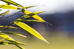 (Vitatrix) Tags: sonnenlicht pflanze