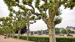 Main riverside, Frankfurt (oxford park) Tags: main river riverside frankfurt mainufer